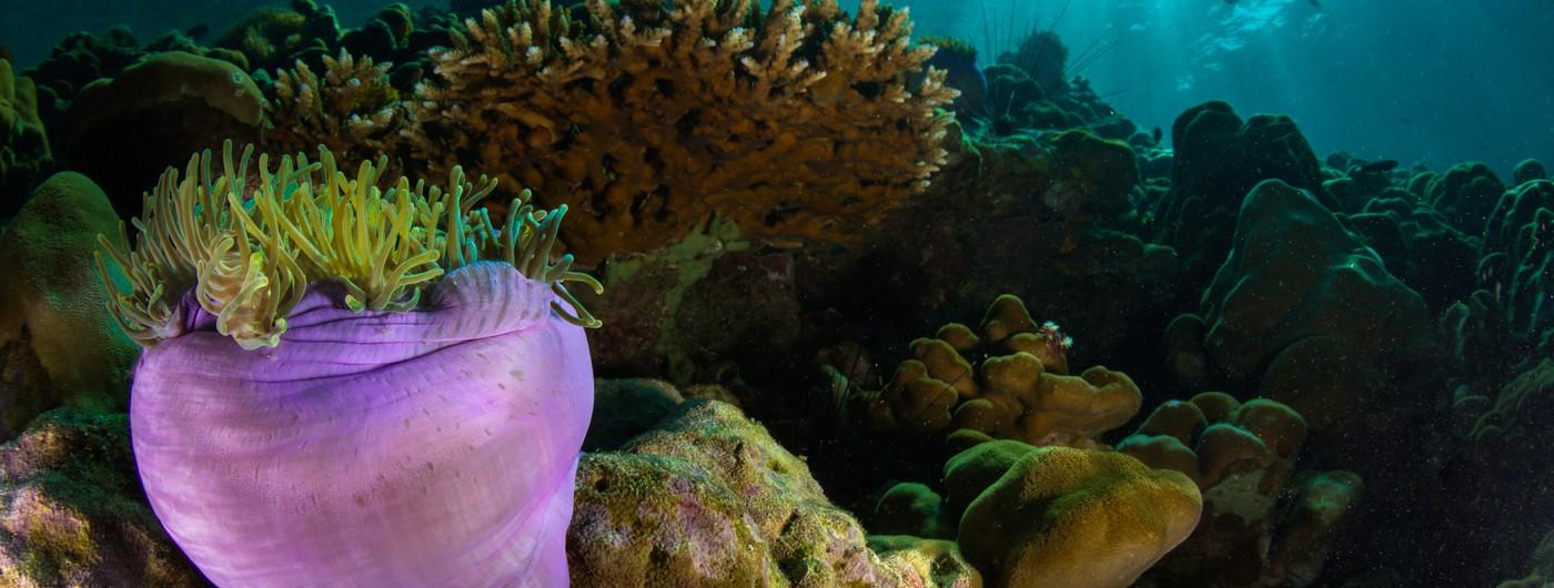 Las inmersiones en el Mar Rojo, destino de interés para los buceadores